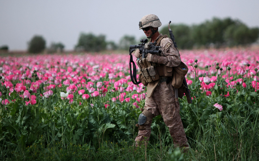 MARJAH, Helmand province, Afghanistan - Corporal Mark Hickok, a 23-year-old combat engineer from North Olmstead, Ohio, patrols through a poppy field during a clearing mission April 9. (U.S. Marine Corps photo by Cpl. John M. McCall)