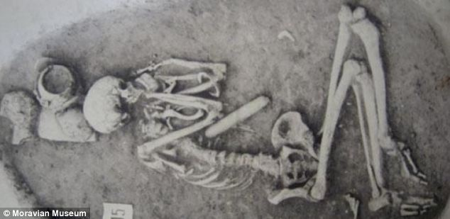 The study looked at skeletons dating back to around 5,300 BC with the most recent to 850 AD - a time span of 6,150 years. Pictured is an early Neolithic (approximately  4000 - 5000 BC) 35-40 year old male from Vedrovice, Czech Republic which was analysed as part of the research