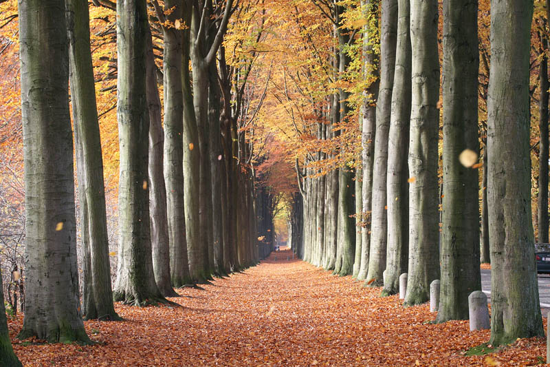 http://twistedsifter.com/2011/11/picture-of-the-day-european-beech-trees-of-mariemont-belgium/