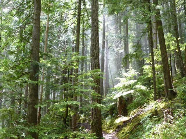 forest%202.jpg