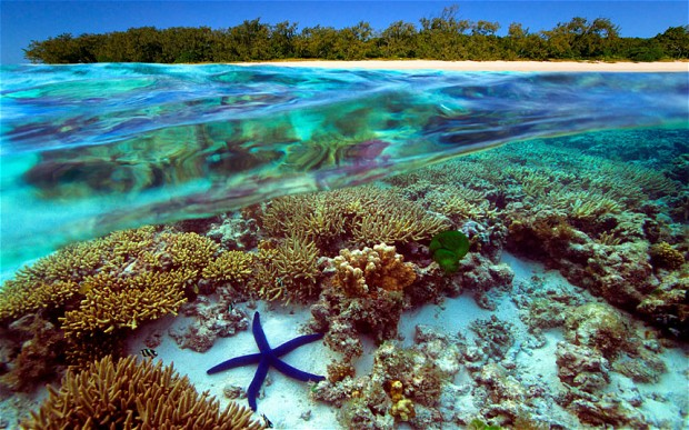 Underwater view of Great Barrier Reef Australia