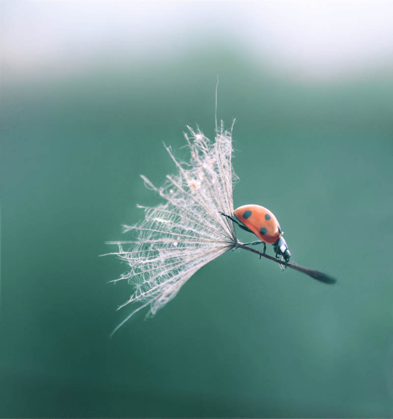 http://twistedsifter.com/2011/07/picture-of-the-day-ladybug-lands-with-style/