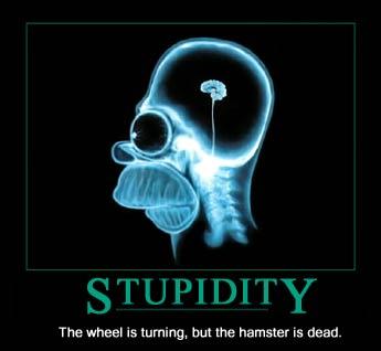 stupidity.jpg