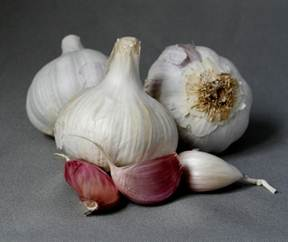 Descri��o: C:\Users\Claudia\Pictures\fresh garlic4.jpg