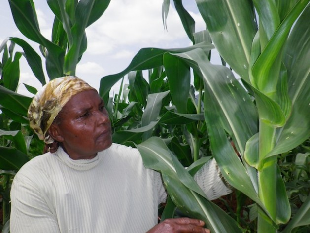Beatrice Mueni Mutisya inspects her maize crops grown in semi-arid Eastern Kenya. Studies have shown that men and women farming together can lift millions of people out of hunger. Credit: Isaiah Esipisu/IPS